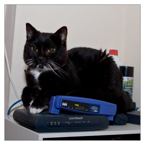 Cat on a WRT54G